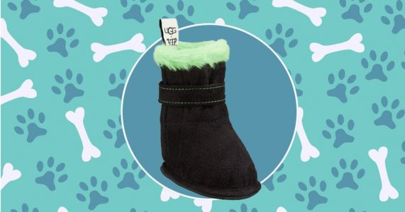 Luxury pet retailer creates £60 Ugg boots for dogs