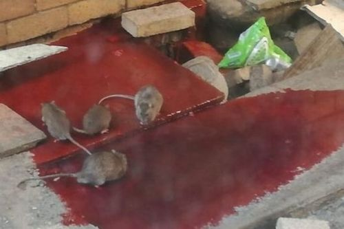 Patients fight for oxygen and rats drink spilled blood in 'hospitals of horrors'