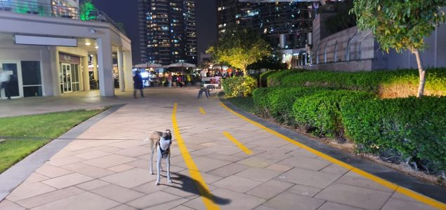 New Scooter And Cycling Tracks Rolled Out In JLT