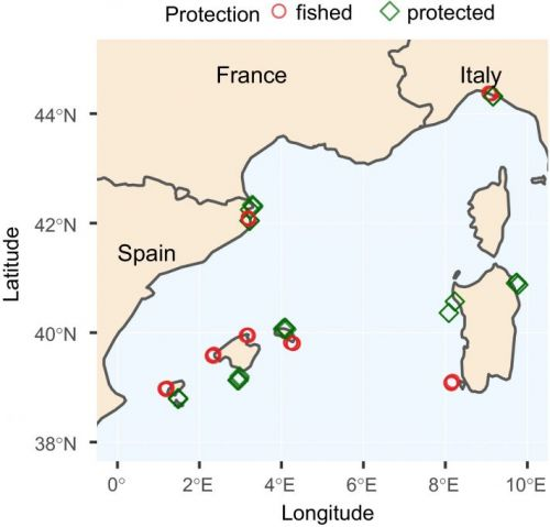 Fish species benefit from marine protection to varying extents - common and exploited species profit most