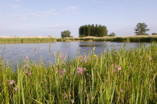 Love Minsmere - tell EDF what you think