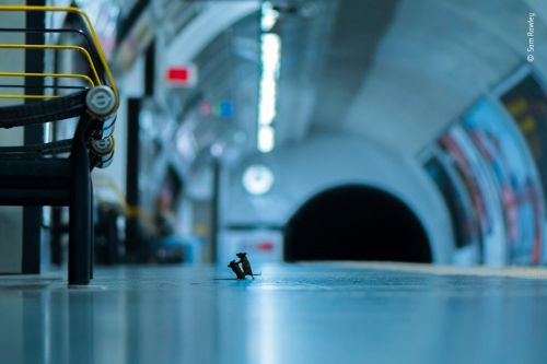 Mice brawling at a London Underground station wins Wildlife Photographer of the Year award