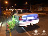 Drink driver allegedly found with a rosebush in his bumper and was over four-times over the limit