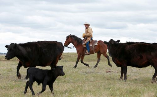 Cowboys dig in against conservationists in battle for soul of American prairies