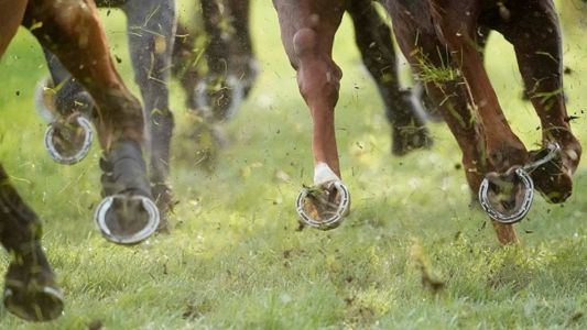 Timeform South Africa SmartPlays: Tuesday 2 March