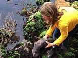 Adorable moment a young girl picks up a small shark and puts it back into the water