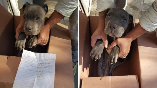 Boy leaves his beloved puppy at shelter to protect it from animal abuser dad