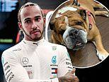 Lewis Hamilton reveals that his beloved bulldog Roscoe 'is now fully vegan'