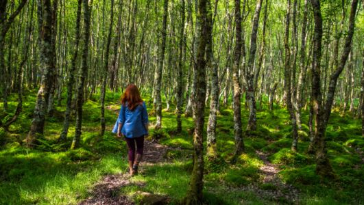 As Ireland's forests reach crisis point, The Nature Trust offers a glimmer of hope