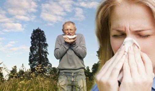 Pollen count: Top tips for dealing with the symptoms from the experts