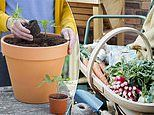 How to grow your own vegetables on your balcony and when to plant what