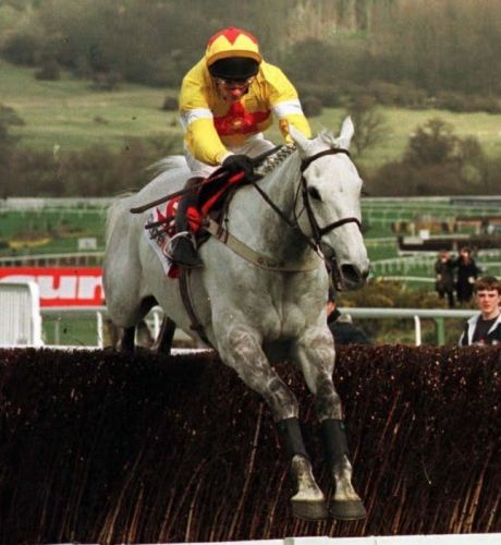 Number 42: The popular grey who dished out a big serving of humble pie in the Champion Chase