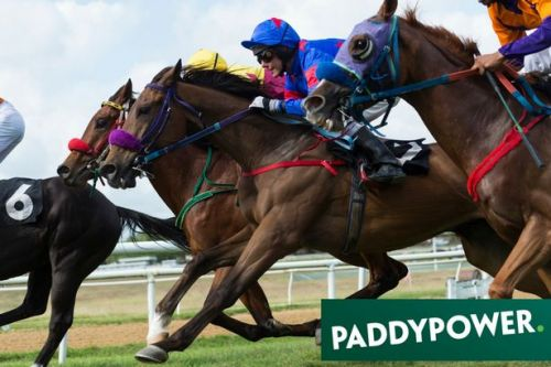 ADVERTORIAL: Cheltenham Saturday horse racing betting tips: Expert says who to back - including a 5-1 runner