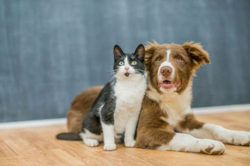 Animal Shelters Call For People To Foster Pets Amid Coronavirus Pandemic