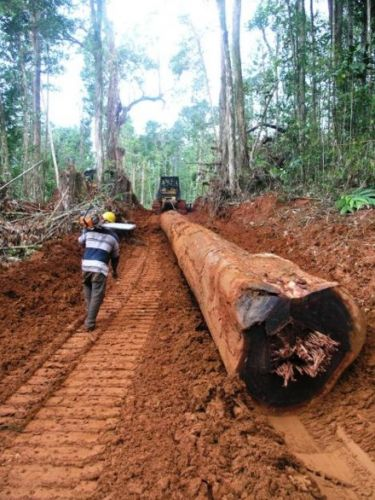 Logging tropical forests jeopardizes fisheries important for food and livelihood