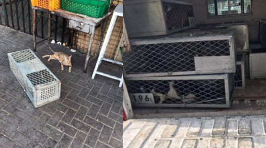 The Shocking Truth Of What Happens To Captured Stray Cats In Dubai Via Private Pest Control Parties