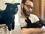 Adorable black cat who looks like Baby Yoda becomes a viral sensation