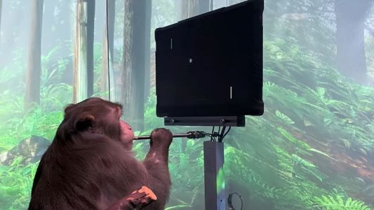 Neuralink's monkey can play Pong with its mind - what could a human do?