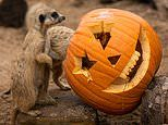 Sydney Zoo celebrates Halloween with adorable images