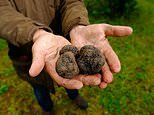 Truffle farmer giving away his £30,000 luxury crop for FREE