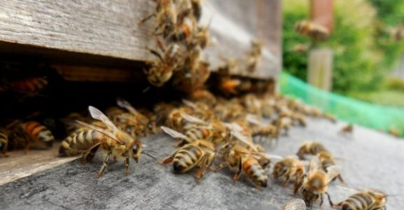 Brussels wants to stop unfettered growth in beehives