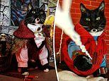 Cat owner loves to put his feline friends into adorable costumes