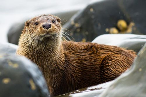 Six of the best places for wildlife spotting in Orkney