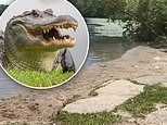 Alligator warning at a lake in Connecticut on the same day as the 'Chance the Snapper' ca