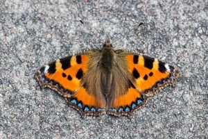 Transform your garden into a butterfly paradise