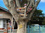 Devastated families call out council for tearing down a treehouse