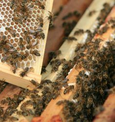 Meet the new-bees