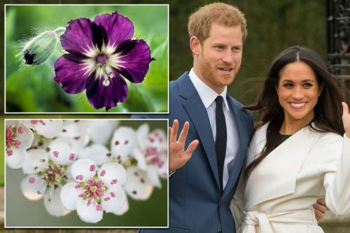 Prince Harry and Meghan Markle's wedding flowers revealed - but even royal gardener isn't allowed to see final arrangement