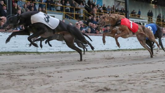 Timeform Greyhound SmartPlays: Tyson can put in a knockout display