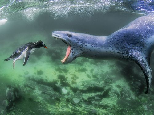 50 stunning wildlife photos that will make you see animals in a whole new light