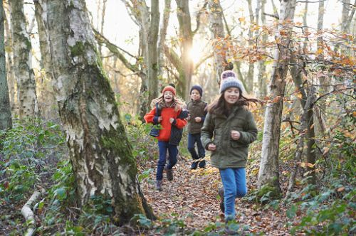 10 cheap nature activities to do with kids in lockdown