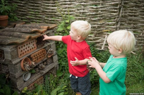 Do 'one wild thing a day' with Dorset Wildlife Trust