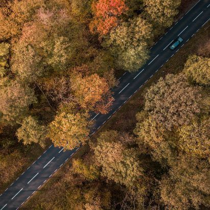 Dutch city swaps asphalt for trees to adapt to climate change