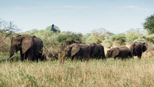 Best virtual safaris and zoo tours to enjoy at home on YouTube