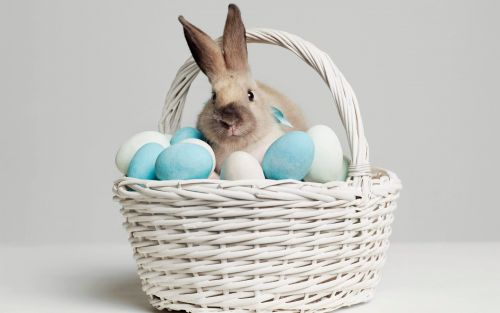 Easter 2020: chocolate eggs, Eostre and why we eat fish on Good Friday