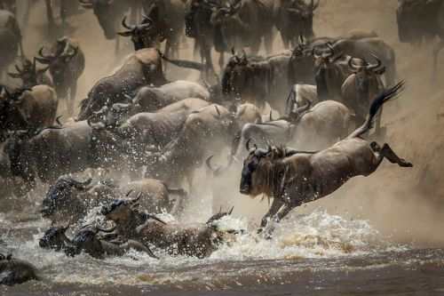 Stunning images of animals in the wild land British photographer a top prize