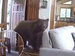 Surveillance video shows brazen brown bear beating down the front door of a home
