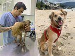 Mange-ridden 'rat-like' dog grows hair and learns to play during a dramatic transformation