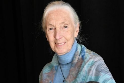 Jane Goodall warns coronavirus was 'inevitable' as humans 'disrespect nature'