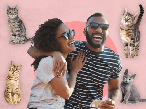 A dating app for cat lovers has launched for International Cat Day