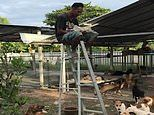 Thai man, 40, is forced to eat his lunch on top of a LADDER to escape a pack of hungry canines