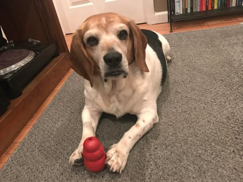 The Kong Classic is the one toy I tell every dog owner to buy - here's why I love it so much that I bought 5
