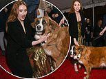 Karen Gillan dazzles in a gold gown as she poses with dog Buckley at The Call of the Wild premiere