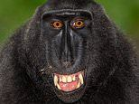 Monkeying around for the camera: Primates strike a pose for hilarious close-up portraits