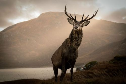 Photographer captures incredible 'Monarch of the Glen' photos of posing stags