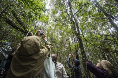 How to bring conservation messaging into wildlife-based tourism